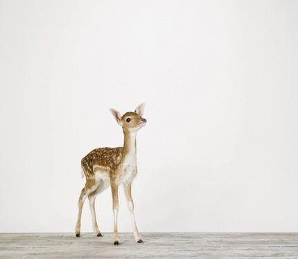 baby Deer de Sharon Montrose