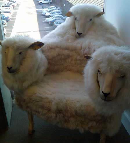 the sheep chair