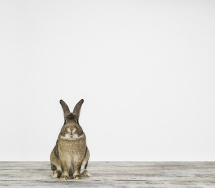 Bunny de Sharon Montrose