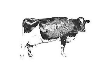 bolsa vaca